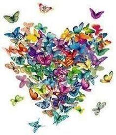 Resultado de imagem para imagem de boa noite borboletas e gatinhos
