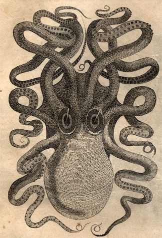 Vintage Giant Octopus Drawing Octopus engraving from...