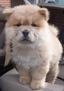 Cute Puppies On Instagram Meet Tokio This Puppy Looks Like