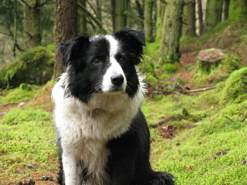 Dog Lost 2 Years Ago In Oregon Found In Utah White Border