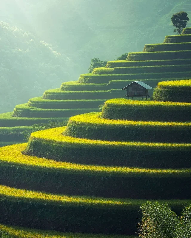 The terrace farms of Munnar, India MostBeautiful Most