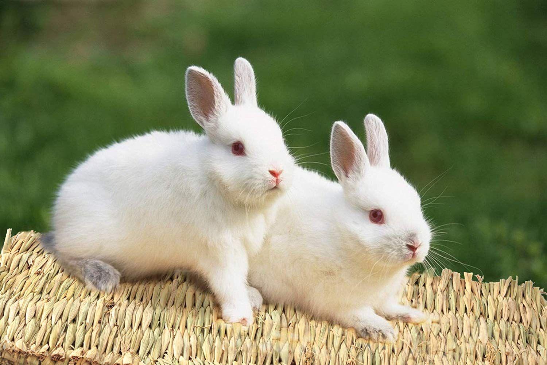 تفسير حلم الأرنب في المنام Look Arab Cute Baby Bunnies Cute Animals Animals