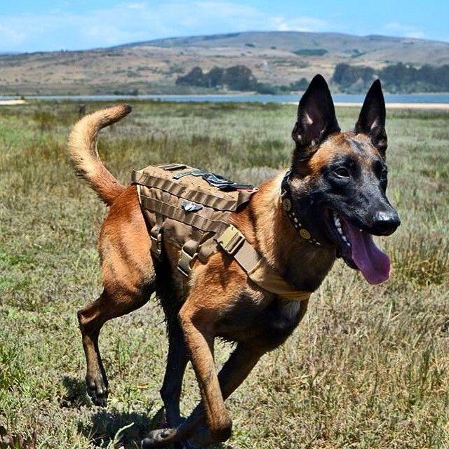 Onetigris Tactical Gear Dog Vest Dog Vest Harness Service Dog