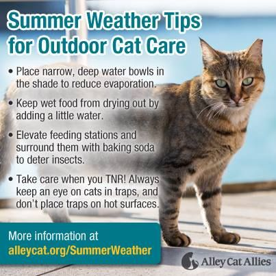 Pin By Noelle Lane On All About Your Pets Cat Care Alley Cat Allies Cats