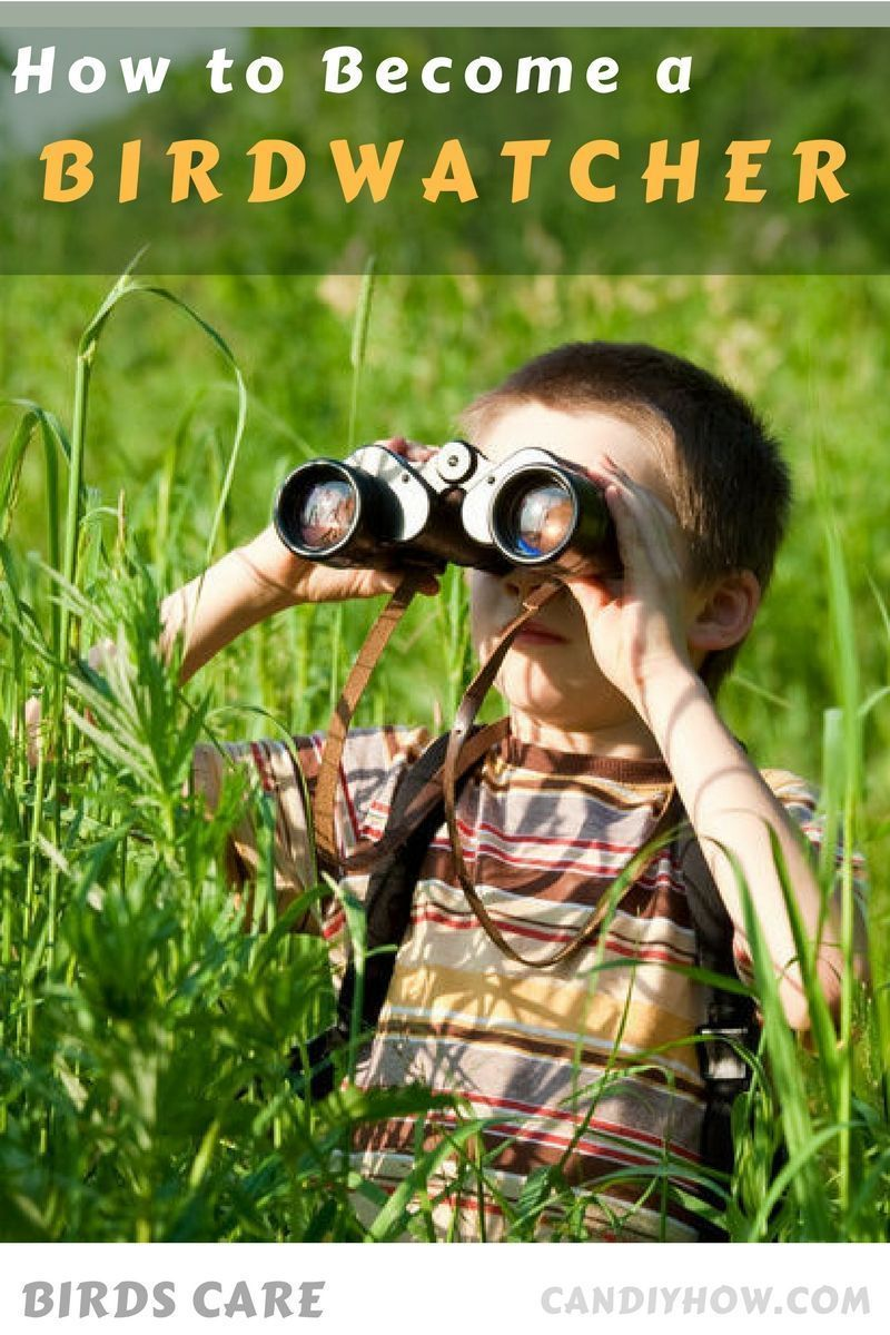 How to Be a Birdwatcher recommend