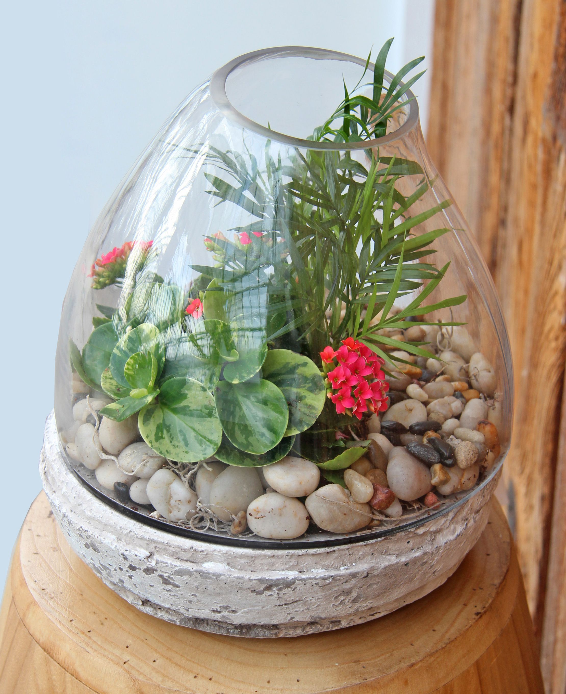 Colourful Terrarium Gardens In Glass Terrariums Pinterest