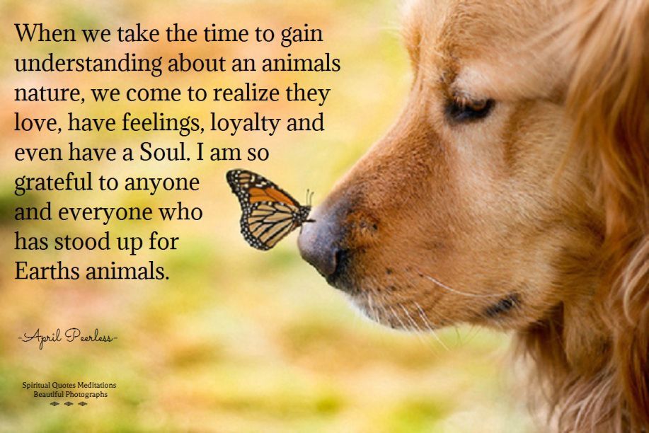 Love Animals Quotes Fascinating Loveearthsanimals 917×612  Love Is All  Angels Among Us