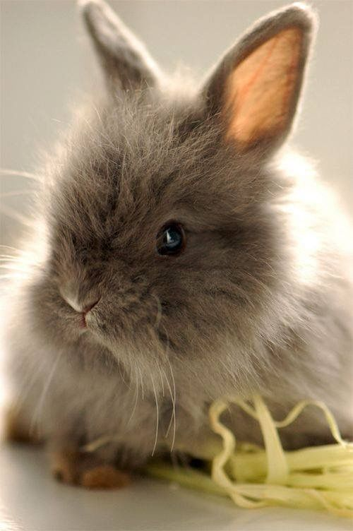 Beautiful Nature And Animals おしゃれまとめの人気アイデア Pinterest Daniela Dz 子ウサギ かわいいペット 可愛すぎる動物
