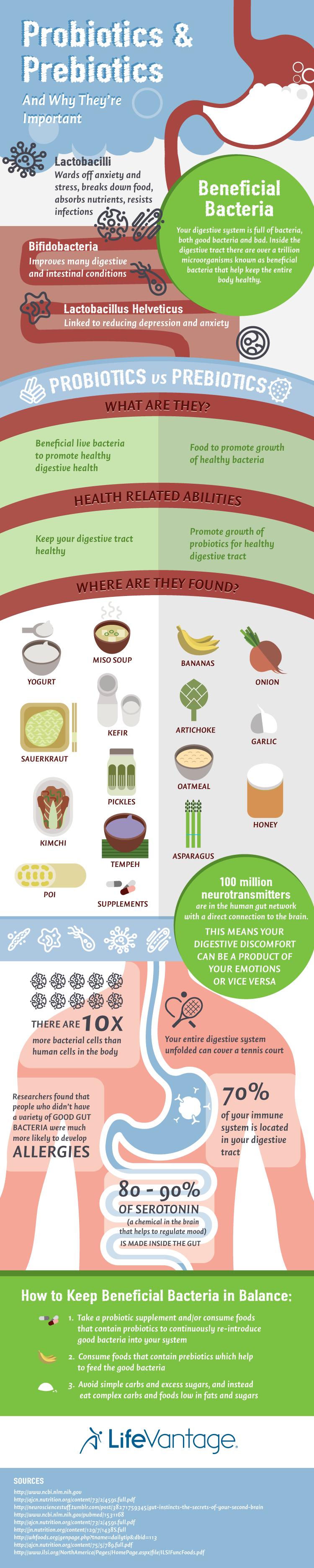 prebiotics and probiotics infographic