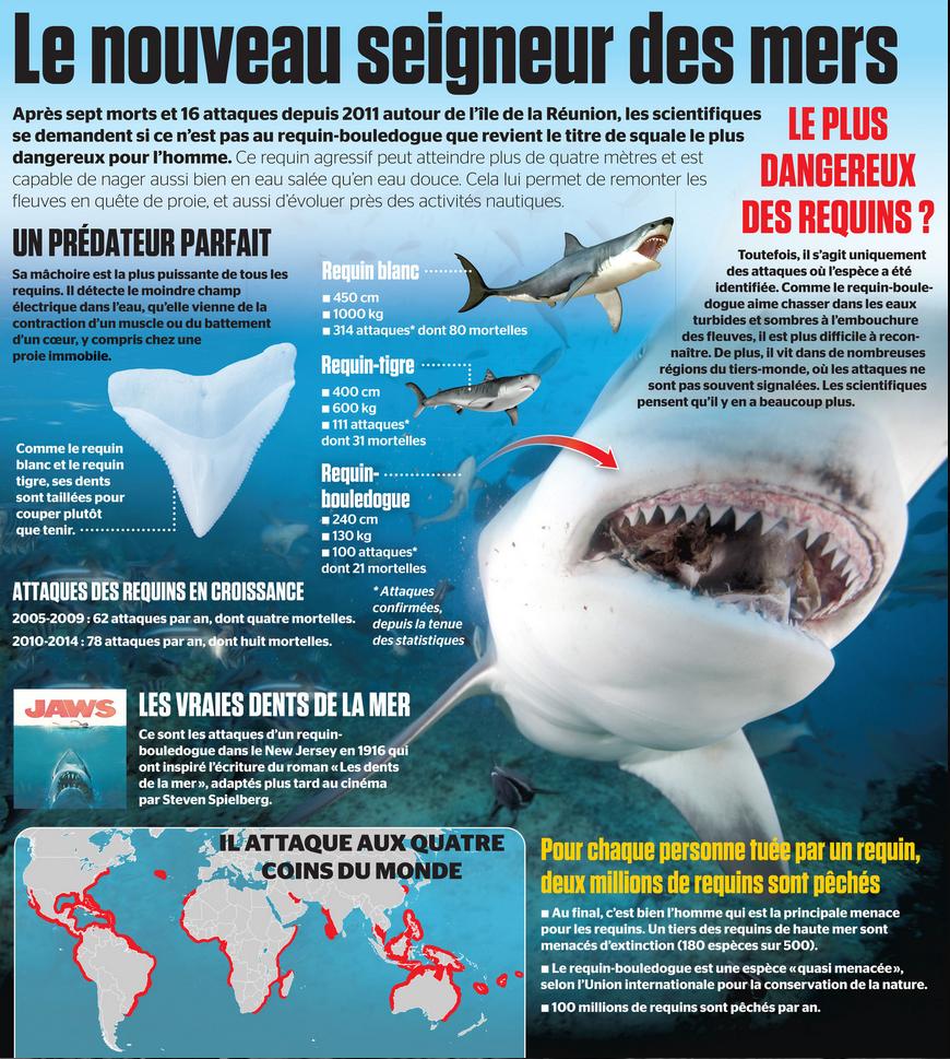 Le requin bouledogue le nouveau seigneur des mers en 5 - Photo de requin tigre a imprimer ...