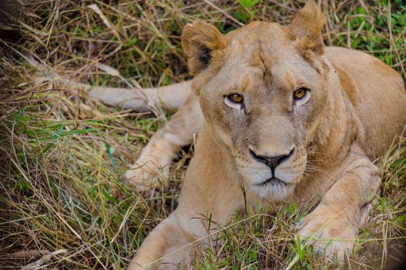 Pin On صور حيوانات الغابة بالكامل Hd اجمل صور خلفيات الحيوانات صور حيوانات جميلة وطريفة