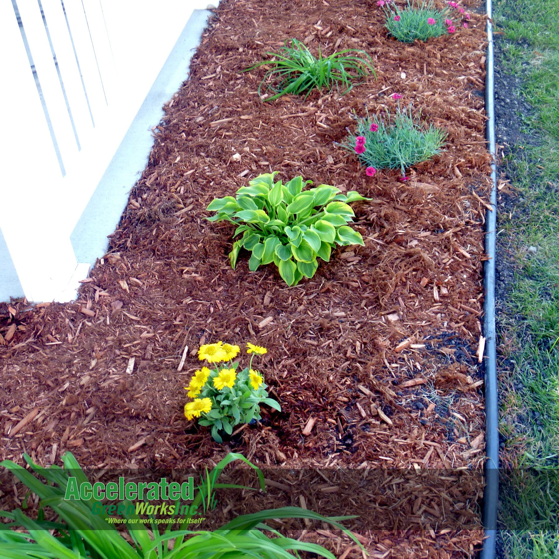 "Cedar mulch is a good ""filler"" for landscaping beds with"