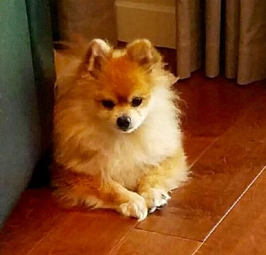 Adopt Prince On Dog Adoption Pets Dogs