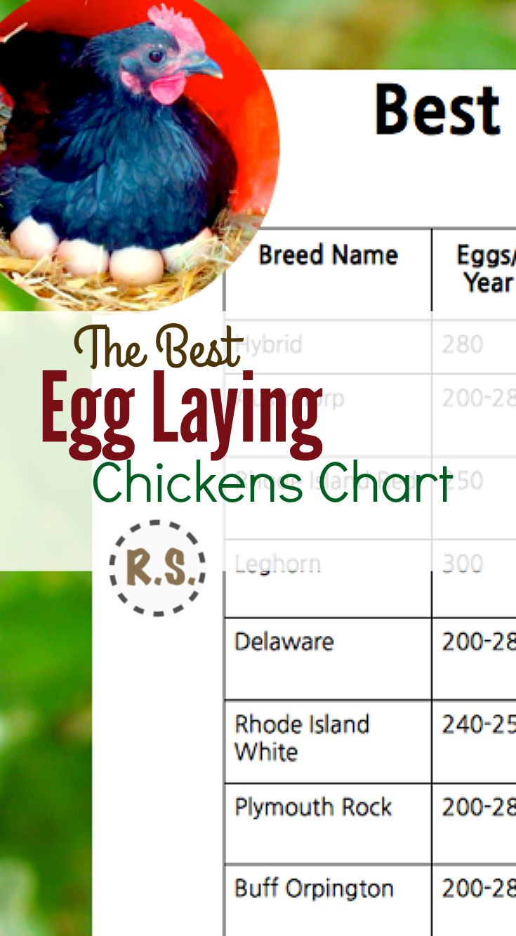 Best egg laying chickens chart also reform stead pinterest rh