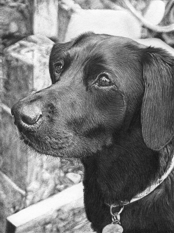 preciosos dibujos de perros a lapiz  10 lindos nombres de perros