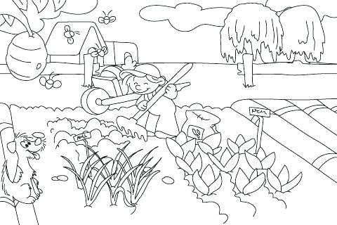 Vegetable Garden Coloring Pages Page Fairy