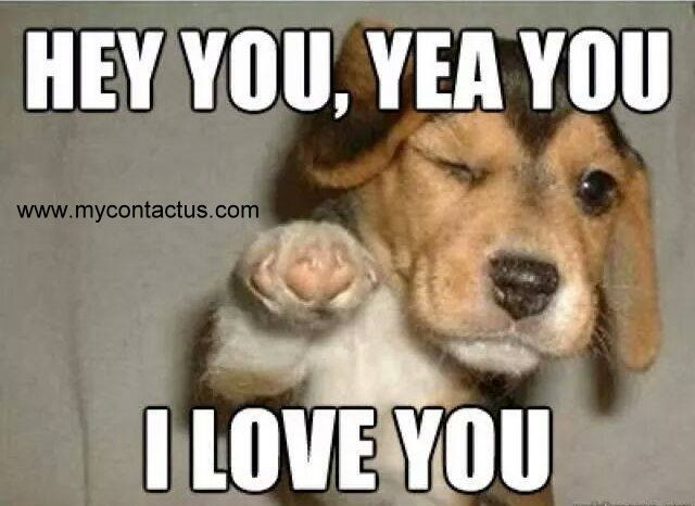 Hey You Yeah You I Love You Puppies Funny Funny Animal Memes Funny Animals