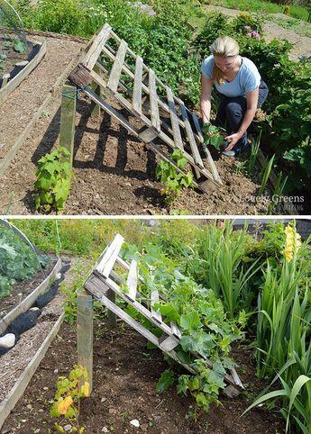 Diy Palettengurken Spalier Verwenden Sie Eine Holzpalette Fur Eine Schnelle Und Stabile Mit Bildern Paletten Garten Selbermachen Garten