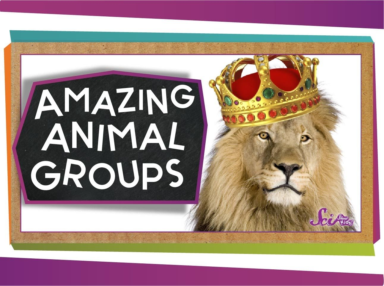 Groups Of Animals Have Some Awesome Names Learn About