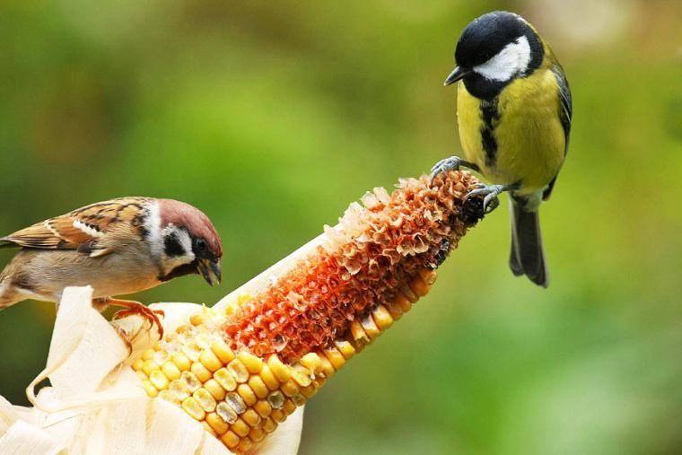 Experte Rat Vogel Im Garten Ganzjahrig Futtern Vogel Im Garten Garten Heimische Vogel