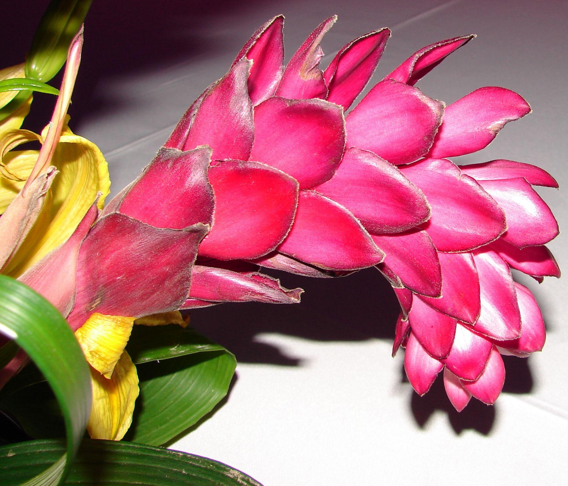 Exotic Red Tropical Flower 1 by FantasyStock.deviantart.com on @deviantART