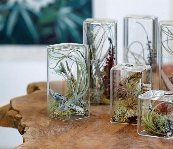 how to water air plants how to display air plant beautiful glass cube  containers