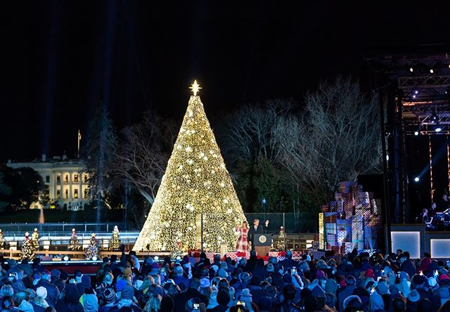 Lighting The National Christmas Tree! 🎄 (With images