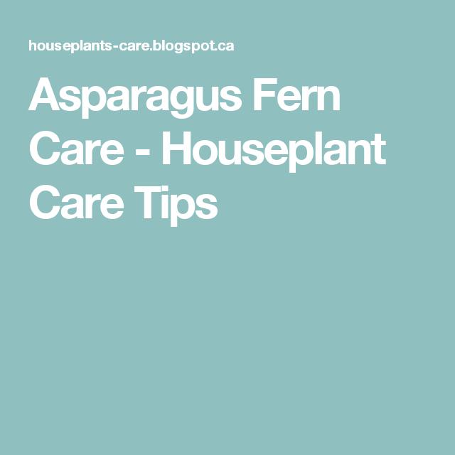 Asparagus Fern Care Houseplant Care Tips Indoor Gardening