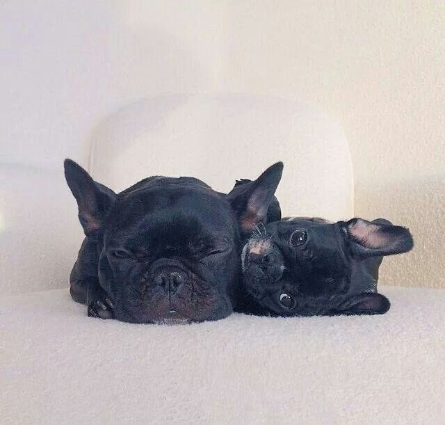 Mama & Baby French Bulldog