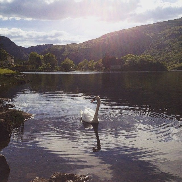 There's something so peaceful about summer evenings at Gougane Barra, Ireland #wanderlust #ireland #travel #peace