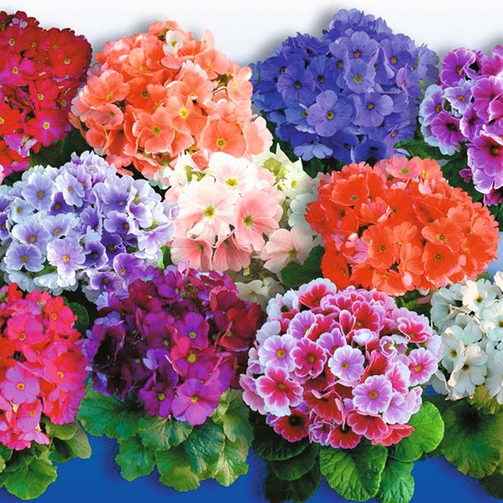Nursery Indoor Plants Near Me: Indoor Flowering Plants