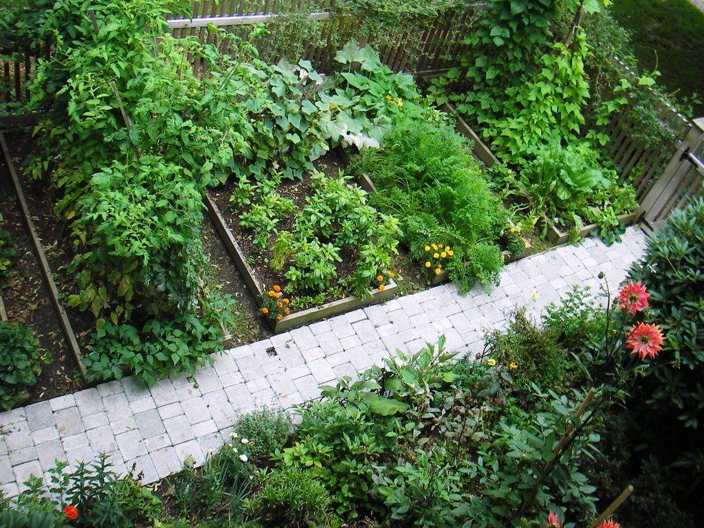 Skippy's garden from start to peak Garden layout