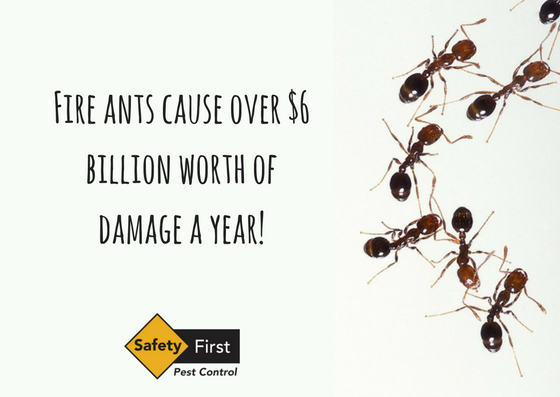 Idea by Safety First Pest Control on Facebook Fire ants