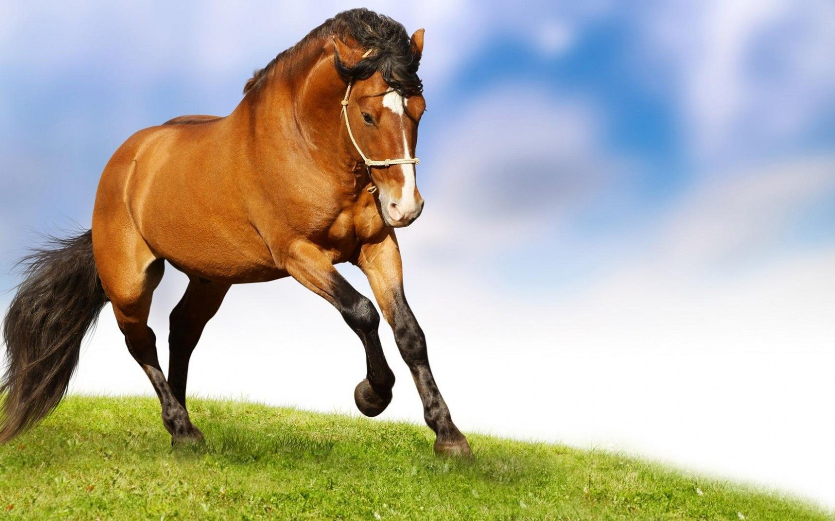 Red Horse Wallpaper Widescreen Hd Free Download Horse Wallpaper Horses Horse Pictures