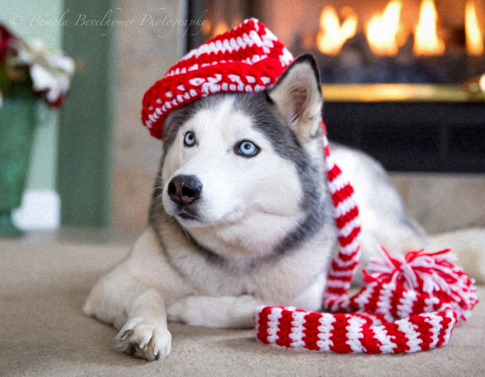 Siberian Husky With Christmas Hat Husky Christmas Hat Best Dogs