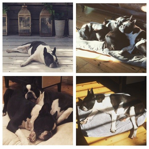 Let's take a doggy nap! Enter your pet to win a share of R101 000! #SouthAfrica only. #Pet competition. mymostbeautiful.com/