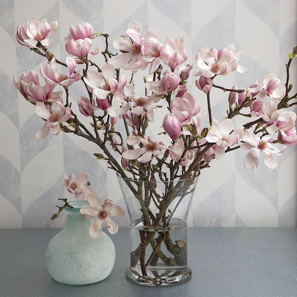 Tulip Magnolia Flowering Branches Tulip Magnolia Modern Flower Arrangements Magnolia Decor