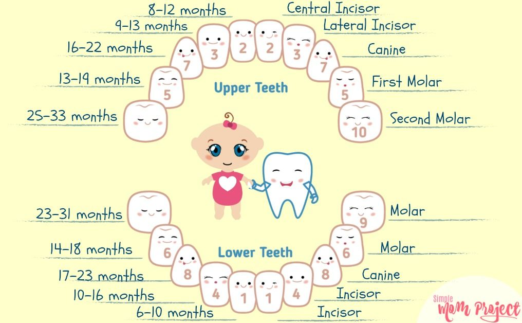 THE ULTIMATE GUIDE FOR A TEETHING BABY   Teething chart ...