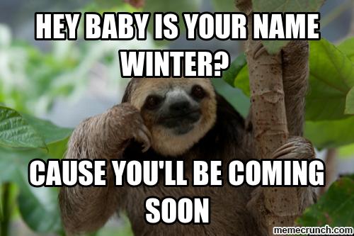 Sloth meme   funny   Memes, Sloth, Bear