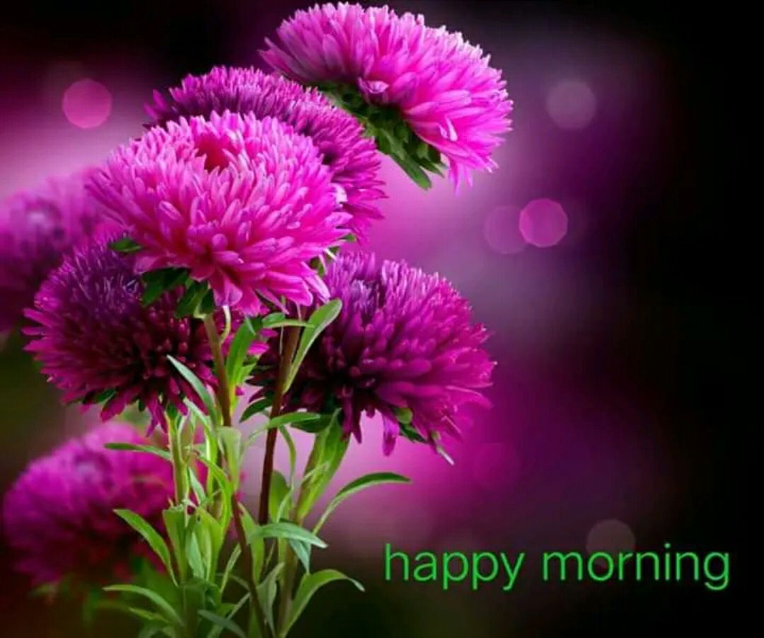 Best 1000 Good Morning Images Download Hd Very Good Morning Images Good In 2020 Good Morning Images Flowers Good Morning Beautiful Flowers Good Morning Flowers