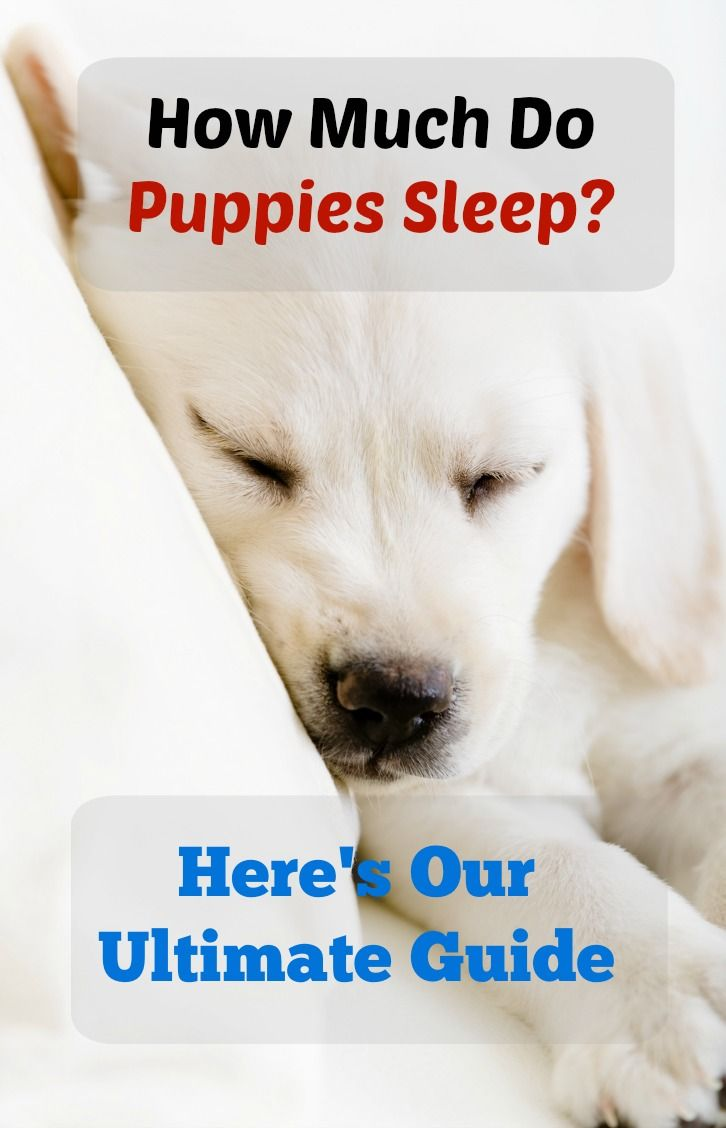 How Much Do Puppies Sleep The Ultimate Guide Animals And Dog