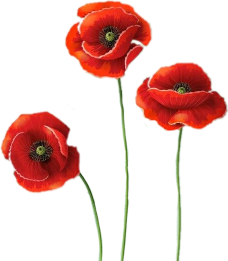 Discover Trending Flower Stickers Beautiful Flowers Images Beautiful Flowers Images Hd Poppy Flower Tattoo Small