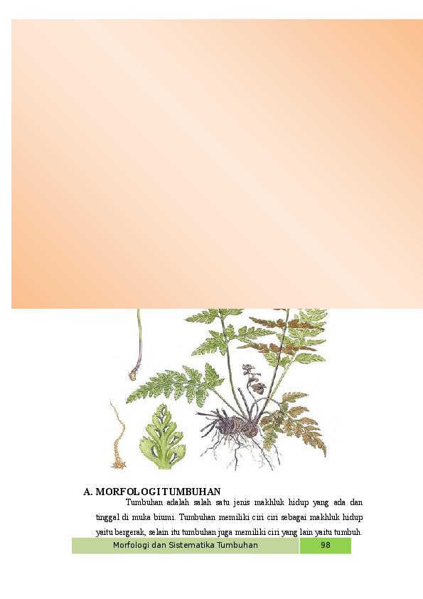 Morfologi Gambar Bunga Pacar Air Tanaman Pacar Air Klasifikasi Pacar Air Gambar Bunga Pacar Air Ciri Morfologi Manfaat Dan Car Bunga Menggambar Bunga Gambar