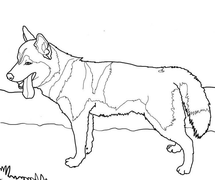 Husky Dog Coloring Pages Printable Dog Coloring Page Puppy Coloring Pages Horse Coloring Pages