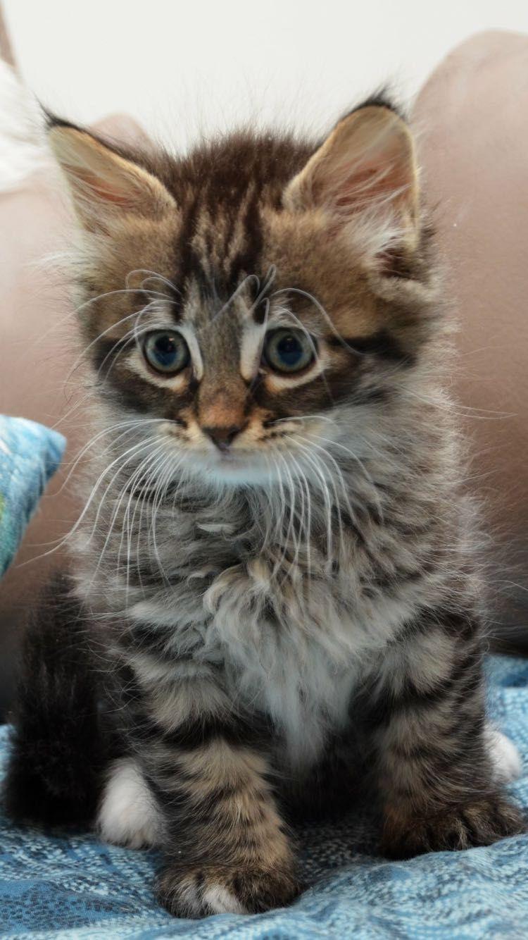 Pin Van Brittany Op Schattige Katten In 2020 Katje Katten Schattige Dieren Schattige Kittens