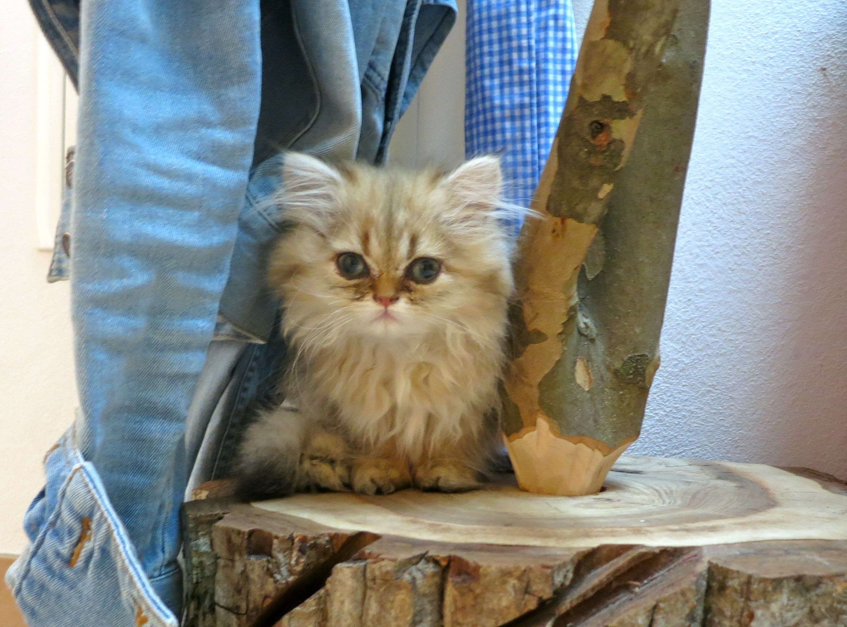 Tips For New Kitten Care Feeding Litter Box Safe Room Cat Introductions Kitten Care Cat Care Cats