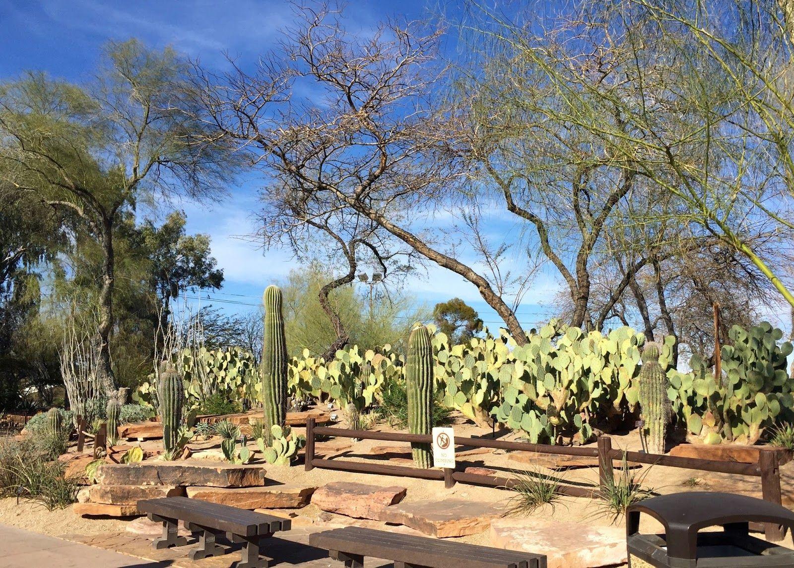 The Ethel M Chocolate Factory S Botanical Cactus Garden Cactus Garden Beautiful Gardens Desert Garden