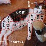 超笑える!ネコの面白い決定的瞬間を撮った画像集(*´ω`*) | ねこっぷる