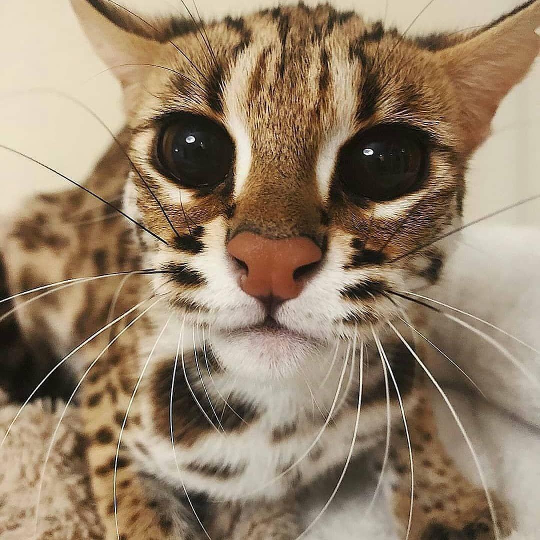 cat funny lovely animalslover bemorepanda catlovers