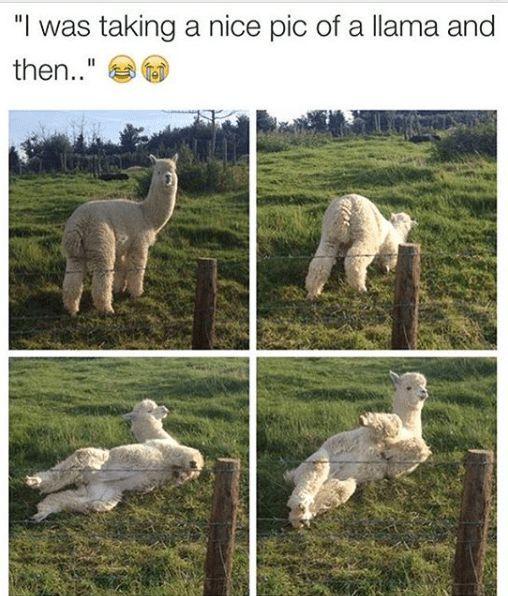 10 Meme des Tages für Freitag, den 07. September 2018